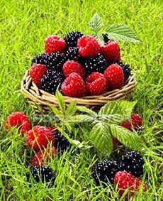 Заработок на ягодах